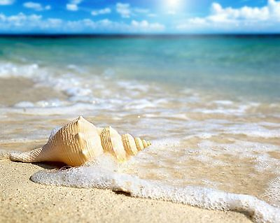 Seashells / Sea Shell - Ocean 8 x 10 / 8x10 GLOSSY Photo Picture IMAGE # 12