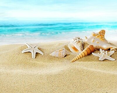Seashells / Sea Shell - Ocean 8 x 10 / 8x10 GLOSSY Photo Picture IMAGE #13