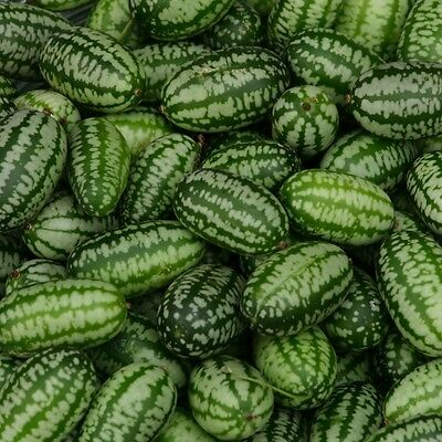 Vegetable Seeds  - Cucumber - Cucamelon - 20 Seeds