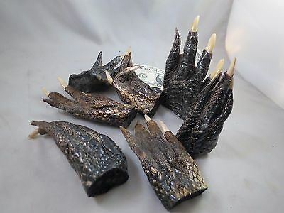 """LOT OF 7 REAL GATOR ALLIGATOR FEET TAXIDERMY claw toes 4-5"""" Genuine Authentic"""