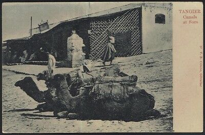 Morocco 1900 Tangier Real Photo Post Card Of Camel Stop & Go Unused
