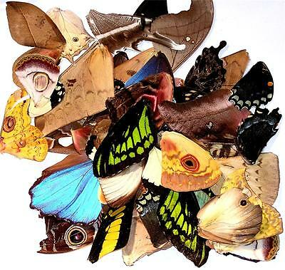 BUTTERFLY/MOTH/UNMOUNTED Great Variety Artwork Jewelry Lot of 25 WINGS