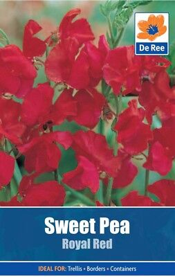 Sweet Pea Royal  Red Flower Seeds (approx 10 seeds)