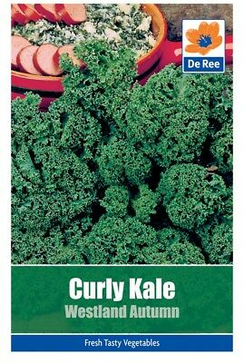 Curly Kale Westland Autumn Vegetable Seeds (approx. 190 seeds)
