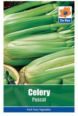 Celery Pascal Vegetable Seeds (approx. 1250 seeds)