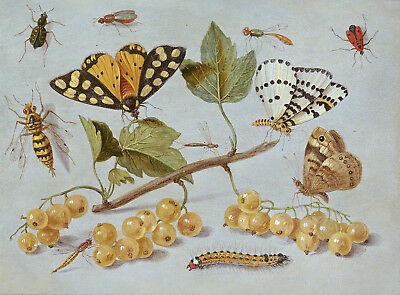 Painting Van Kessel (Cir.) Study Of Butterfly And Insects Poster Print Lf3045