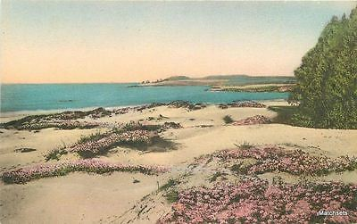 1920s HAND COLORED CARMEL BY THE SEA CA Sand Dunes flowers postcard 8956