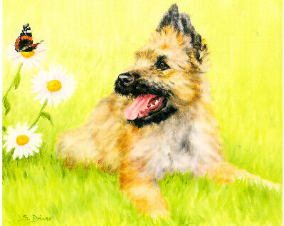 Belgian Shepherd Laekenois Limited Edition Puppy Print by Driver Who Are You?