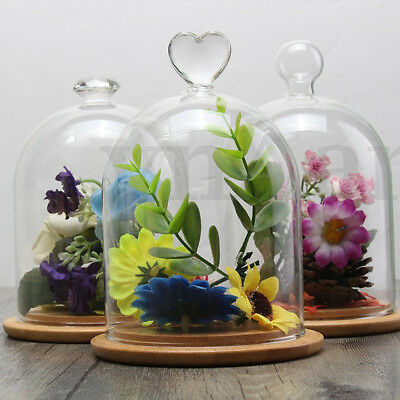 Clear Glass Display Cloche Bell FlowerJar Dome Immortal Preservation+Wooden Base