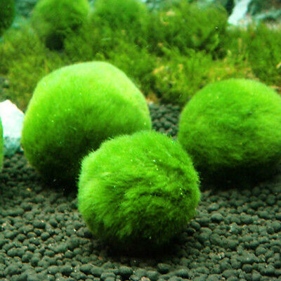 1Pc Artifical Green Seaweed Ball Lives Plant for Betta Fish Tank Aquarium Decor