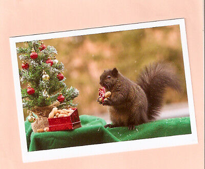 Squirrel Nuts Christmas Tree Christmas Cards Box of 10