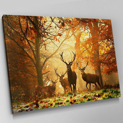 Stag Herd Sunset Autumn Forest Art Print Picture Canvas Wall Art Prints Unframed