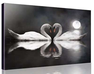 BLACK&WHITE LOVE HEART SWANS STRETCHED Pictures Canvas Wall Art Prints Unframed