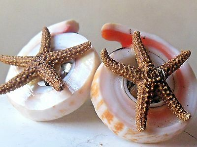 Cool Vintage 1950's genuine Starfish Shell clip on earrings*mid century kitsch