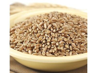 Bronze Chief 5 lb Wheat Berries Kernels Hard Red Spring Whole Grain Montana BULK