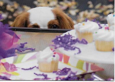 I SEE CAKE!   Blenheim Cavalier King Charles Spaniels Happy Birthday blank card