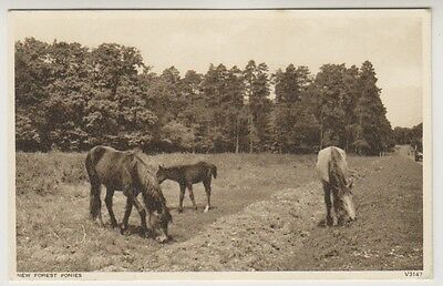 Hampshire postcard - New Forest Ponies