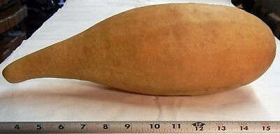 Smooth GOURD Show off your artistic talents  See pic for size (G1)