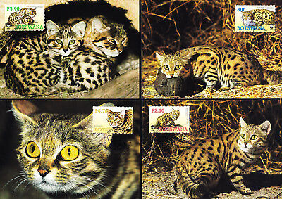 053582 WWF Katzen Cats Botswana Maximum Card ´s