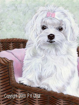Dog Art Painting,Pencil&Ink,Maltese Print #3,by PKUfnal