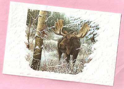 Moose by Carol Decker Embossed Christmas Cards Box of 16 Close Encounter