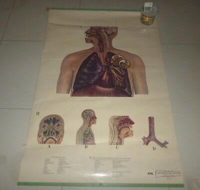 Vintage Schick Pull Down Laminated Anatomy Medical Chart The Respiratory System