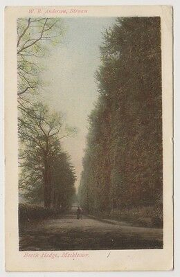 Perthshire postcard - Beech Hedge, Meikleour