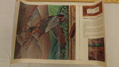 Vtg Craftaid Doodle Page Mother Nature's Wildlife Scene Series 11-B/5 Gene Nolan