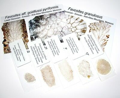 Devonian Hamar Laghdad FAVOSITES coral THIN SECTION collection 5 types