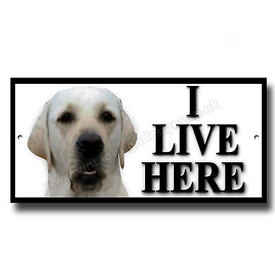 White Labrador I Live Here Metal Sign.instructional Dog Sign,house Warning Sign