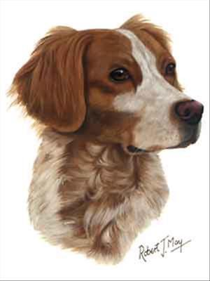 Brittany Spaniel Dog Robert May Art Greeting Card Set of 6