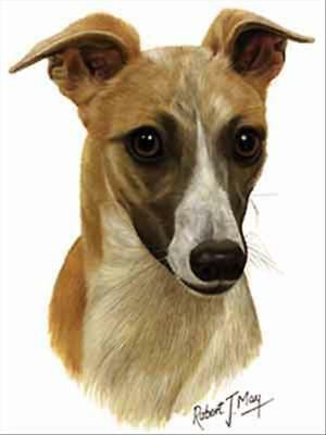 Whippet Tan and White Dog Robert May Art Greeting Card Set of 6