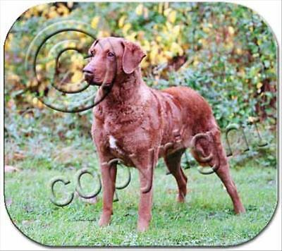 Chesapeake Bay Retriever Dog Computer MOUSE PAD Mousepad