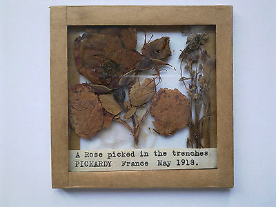 A Ww1 Rose Picked In The Trenches Of Pickardy France May 1918