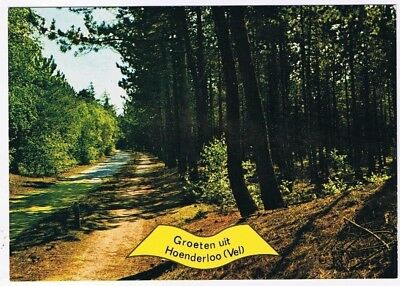 Holland Netherlands Postcard Hoenderloo Tree Lined Paths in Woods