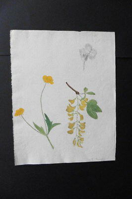 French School Ca. 1870 - Study Of Flowers - Watercolor Sign. R. Beaujour