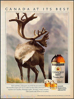 1990 CARIBOU in CANADIAN MIST Whiskey Whisky AD