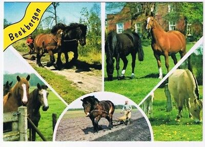 Holland Netherlands Postcard Beekbergen Horses Multi View