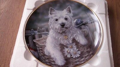 Danbury Mint Plate 'hitching A Ride ' By Paul Doyle , Westies