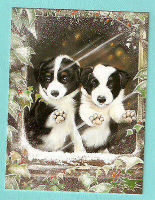 Border Collie Puppy Duo Christmas Cards Box of 12