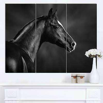 Designart 'Black Arabian Horse Portrait' Extra Large Animal Artwork - Black
