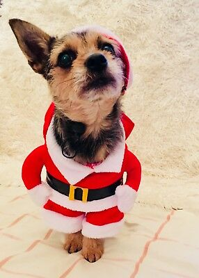 Pet London Designer Fun Christmas Dog Puppy 3D Santa Costume Outfit With Red San