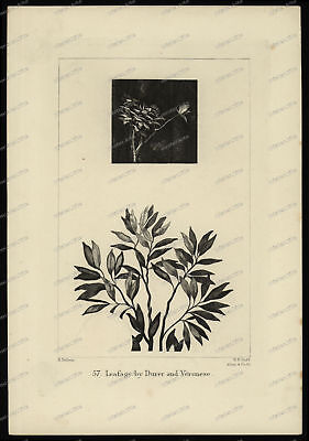Druck-Stahlstich-Engraving-H.Dubois.Allen&Co.Sc.Leafage by Durer and Verone-58