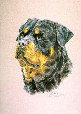 Rottie Rottweiler Head Study Limited Edition Art Print by UK Artist Sue Driver