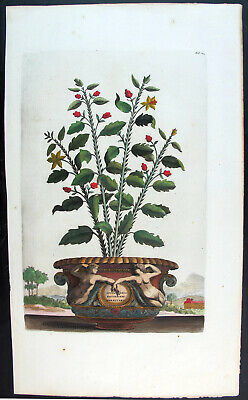 1696,Rare Munting Abraham With Orginal Hand Color Folio Spinachia Americana U34