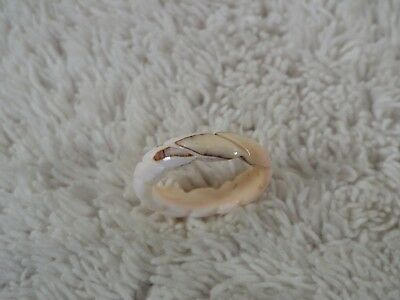 Carved Sea Shell Band Ring ~ Size 8.5 (D35)