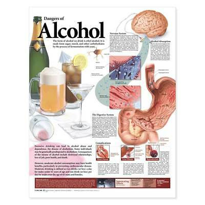 Anatomical Chart Dangers of Alcohol -Show Process Of Absorbson & Effect On Liver