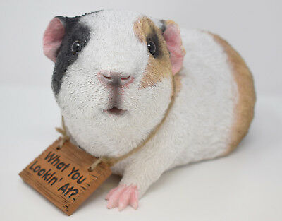 Smooth Haired Tri Coloured Gary Guinea Pig Garden Gift Ornament Animal Statue