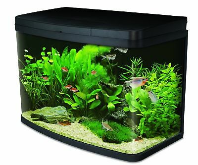 Interpet Insight 64L Aquarium Fish Tank with LED, Filter, Starter Kit Curved