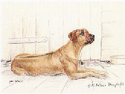 Rhodesian Ridgeback Limited Edition Print by UK Artist Gill Evans LAST ONE!
